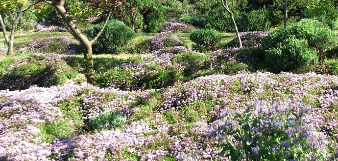 Giardino vivaio la valletta piante tappezzanti for Piante tappezzanti